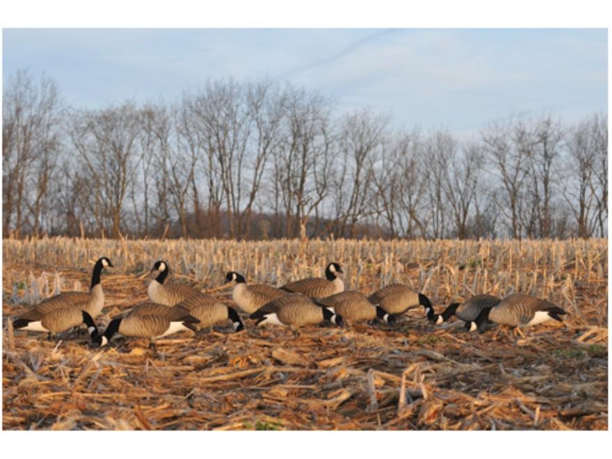 GHG Tim Newbold Signature Series Fully Flocked Lesser Goose Decoys Harvester Pack of 12