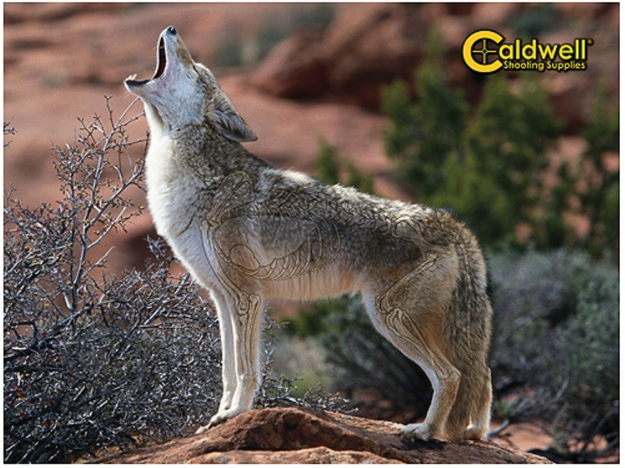 """Caldwell """"The Natural Series"""" Coyote Target"""