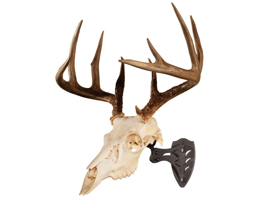 Skull Hooker Little Hooker European Mount Display Steel Graphite Black