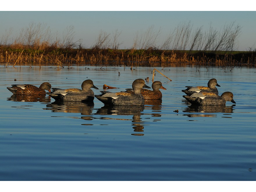 ... detail of GHG Pro-Grade Weighted Keel Gadwall Duck Decoys Pack of 6