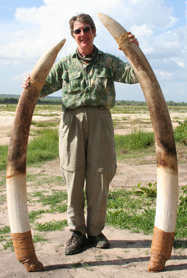 Brenda displays the tusks, 47 and 53 pounds; no wonder she is smiling. The longer one is just over 6 feet in length.