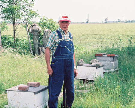 My dad Gilbert, in 1988, with his three remaining beehives.  This is a spring picture and dad has added a honey production super to the far hive body.