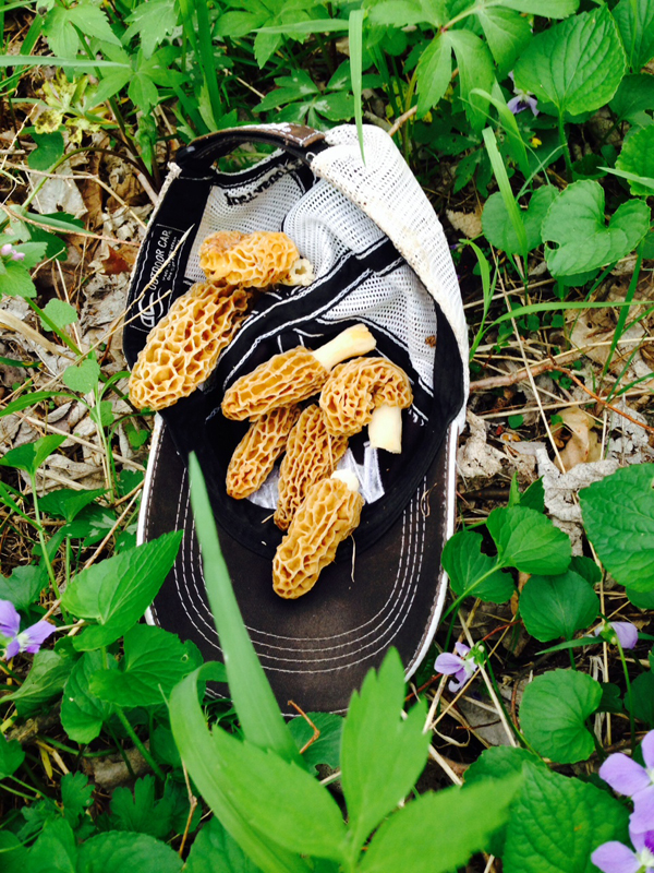 These morel mushrooms are the crème de la crème, and spring turkey season is the right time to look for them in Missouri.