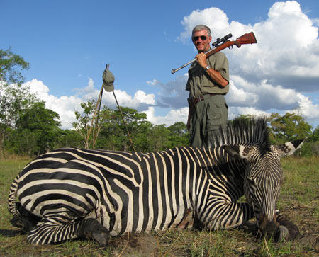 We think of zebra as just black and white stripes; but study the stripes on the three zebras and you will see that each is different.  First generation Nearly-Perfect Safari Rifle in 375 H&H.