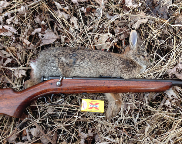 For a kid growing up, or an adult like myself (who never grew up), rabbit hunting with a favorite .22 rifle is always a pleasant experience.