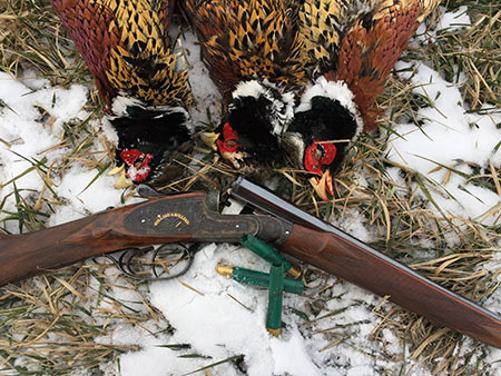 A 410 side by side is not my first choice for most pheasant hunting, but when they're hunkered down in the shelterbelts the shooting can be fast and close.  In this case, the little 410 was all I ever needed.