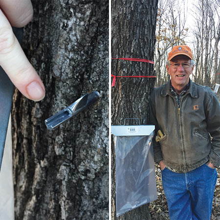 This small metal tap is driven into a drilled hole, then the hanger and bag are attached. Now you have to wait for the sap to run.