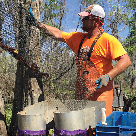 Derek Aucoin, is pouring the catch from this trap (probably about a pound) onto the sorter. A sack of crawfish is about 40 pounds.