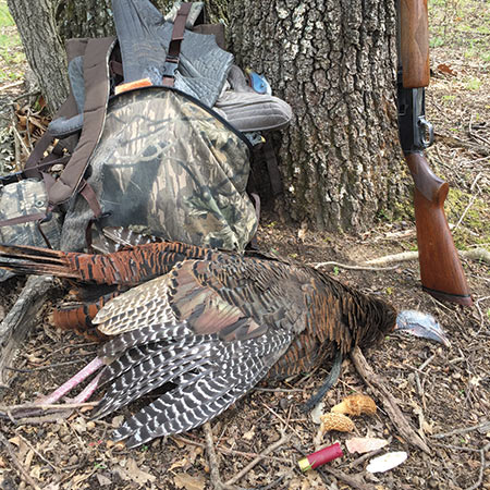 A Bearded Hen is an unusual trophy; finding an arrowhead and mushrooms the same day makes it even more special. That's my Winchester Model 12 against the tree.