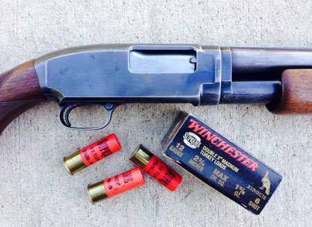 An old Winchester Model 12, 12 gauge, made in 1940 - Larry's favorite shotgun for turkeys.