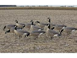 Avian-X Flocked Outfitter Pack Lesser Canada Goose Decoy with Slot Bag Pack of 12