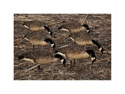 Avian-X Flocked Honkers Feeder Canada Goose Decoy Pack of 6