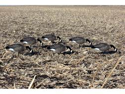DOA Rogue Series Feeder Canada Goose Decoy Pack of 6