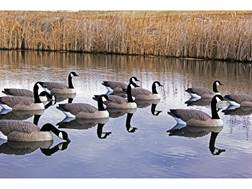 DOA Rogue Series Floater Canada Goose Decoy Pack of 6