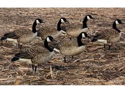 Avian-X Flocked Honkers Walker Canada Goose Decoy Pack of 6