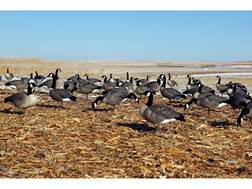 DOA Rogue Series Combo Canada Goose Decoy Pack of 6