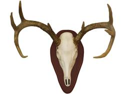 Hunter's Specialties Euro Half Skull Deer Mounting Kit