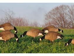 GHG Newbold Lesser Full Body Goose Decoy Pack of 6