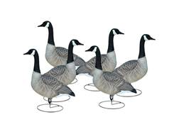 Final Approach Livecraft Alert Full Body Canada Goose Decoy Pack of 6