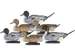 Dakota Decoy X-Treme Pintail Duck Decoy Pack of 6