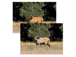 "Safari Press Perfect Shot North American Target Elk 24"" x 36"" Package of 5"