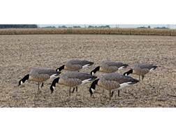 Avian-X Flocked Feeder Lesser Goose Decoy Pack of 6