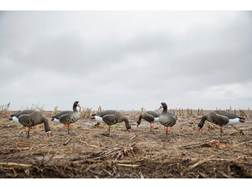 Tanglefree Pro Series Specklebelly Goose Full Body Combo Decoy Pack of 6