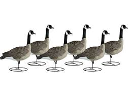 Dakota Decoy Signature Series Full Body Fully Flocked Sentry Canada Goose Decoy Pack of 6 with Bags