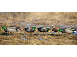 GHG Pro-Grade Full Body Flocked Head Mallard Duck Decoys Harvester Pack of 12