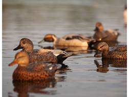 GHG Pro-Grade Pre-Texas Rigged Gadwall Duck Decoy Pack of 6
