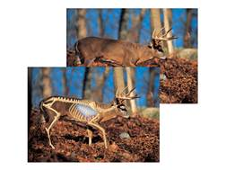 "Safari Press Perfect Shot North American Target Whitetail 24"" x 36"" Package of 5"