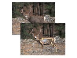 """Safari Press Perfect Shot North American Target Mule Deer 24"""" x 36"""" Package of 5"""