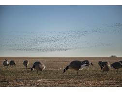 Tanglefree Pro Series Canada Goose Full Body Feeder Decoy Pack of 6