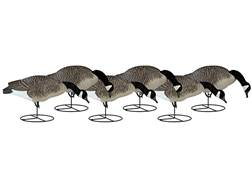 Dakota Decoy Signature Series Full Body Feeder Canada Goose Decoy Pack of 6