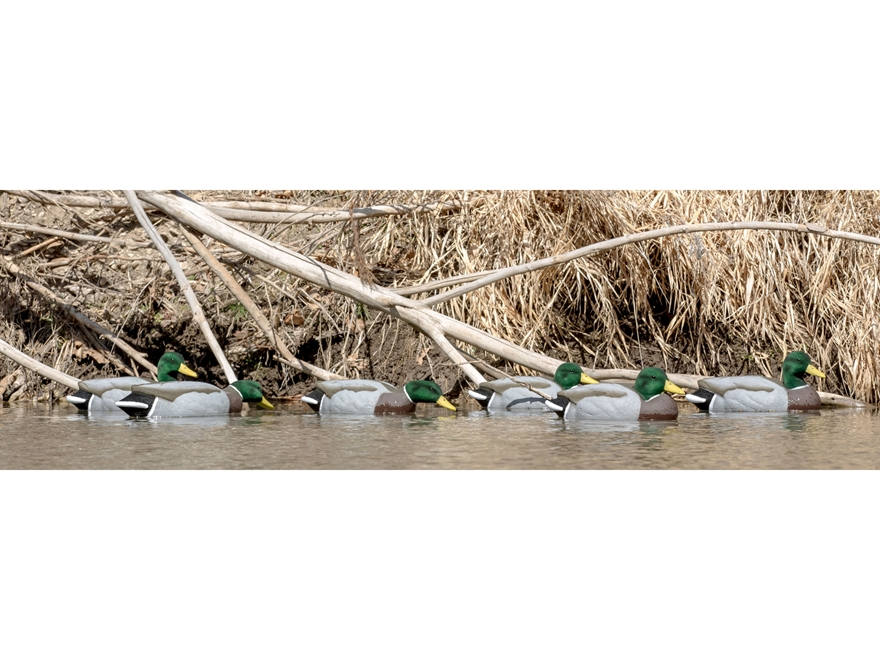 Tanglefree Migration Mallard Drake Foam Filled Flocked Duck Decoy Pack of 6