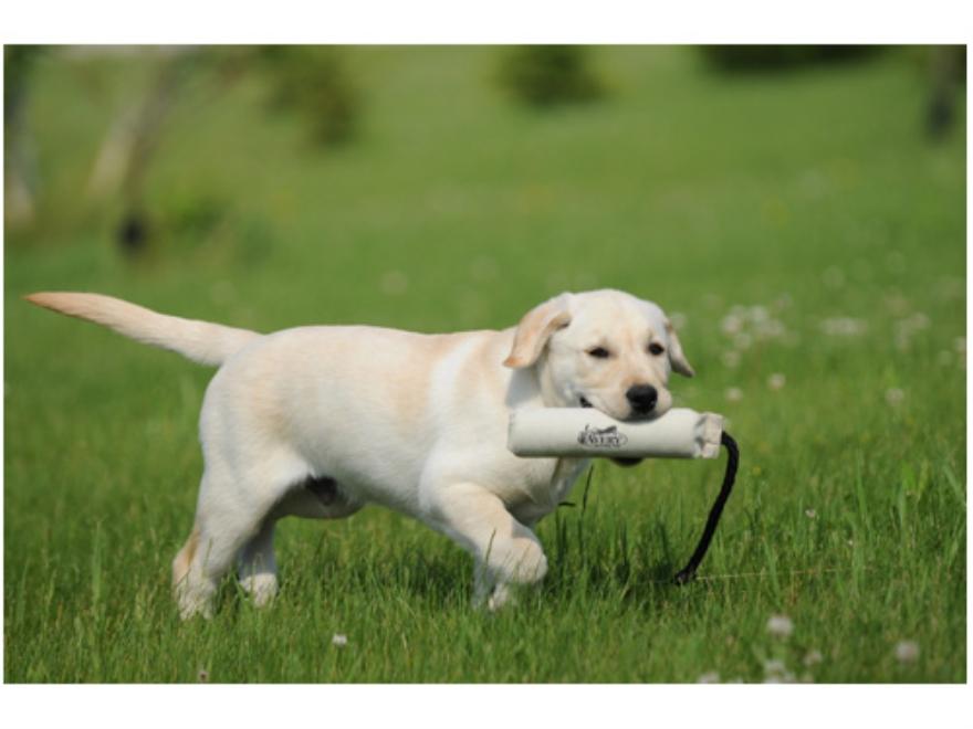 "Avery 2"" HexaBumper Dog Training Dummy"