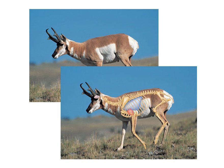 "Safari Press Perfect Shot North American Target Pronghorn 24"" x 36"" Package of 5"