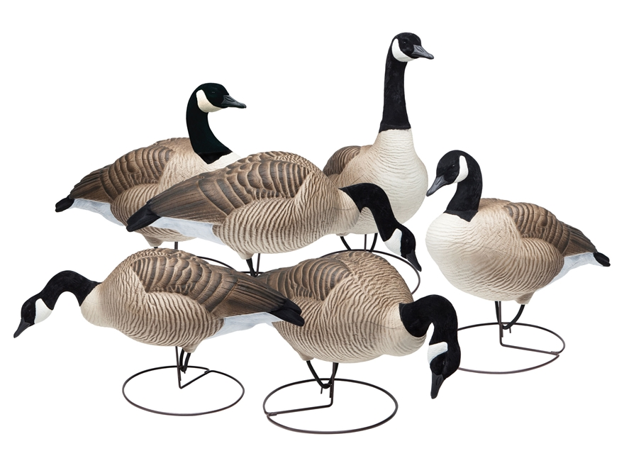 Final Approach Last Pass HD Field Honker Combo Pack Full Body Canada Goose Decoy Pack of 6