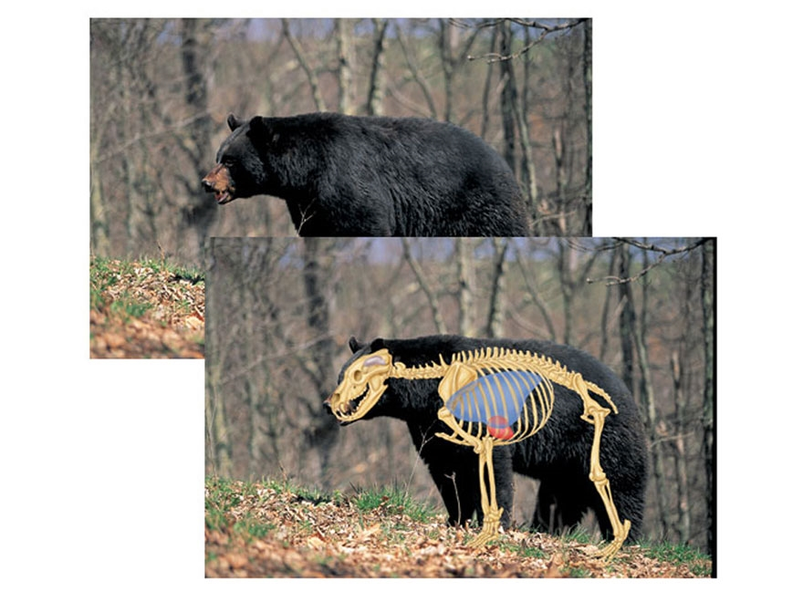 "Safari Press Perfect Shot North American Target Black Bear 24"" x 36"" Package of 5"