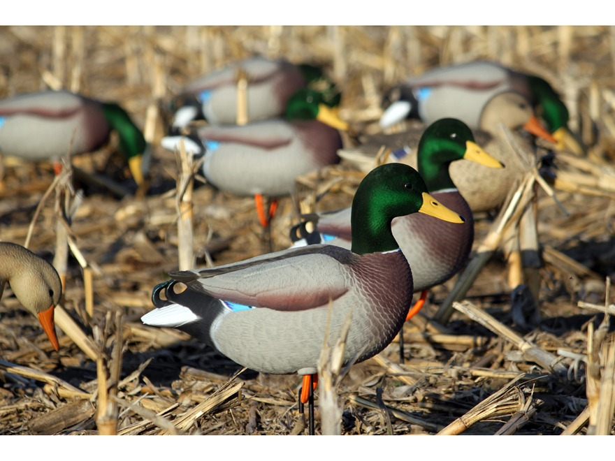 Dakota Decoys X-Treme Full Body Mallard Duck Decoys Pack of 12