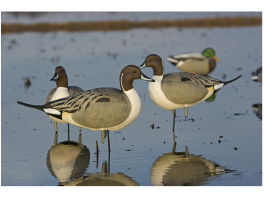 GHG Oversize Full Body Pintail Duck Decoys Active Pack of 4