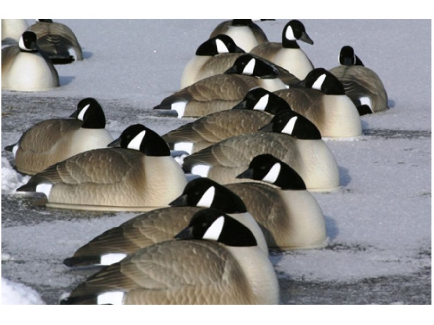 Flambeau Storm Front Flocked Head Canada Goose Sleeper Pack Shell Decoys Pack of 12