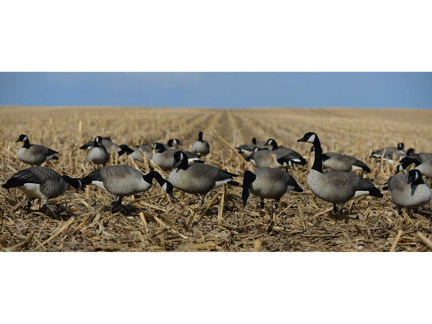 GHG FFD Elite Honker Harvester Full Body Goose Decoy Pack of 6
