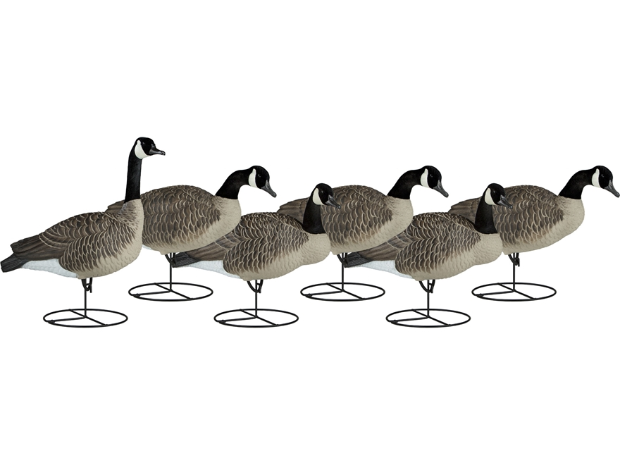 Dakota Decoy Signature Series Full Body Upright Canada Goose Decoy Pack of 6