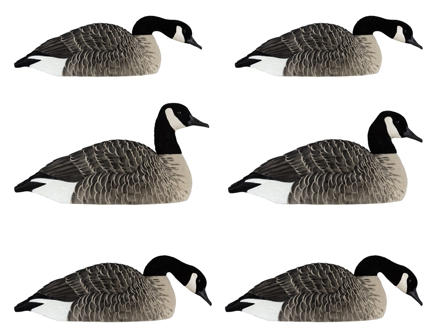 Avian-X Painted Honkers Shell Canada Goose Decoy Pack of 6