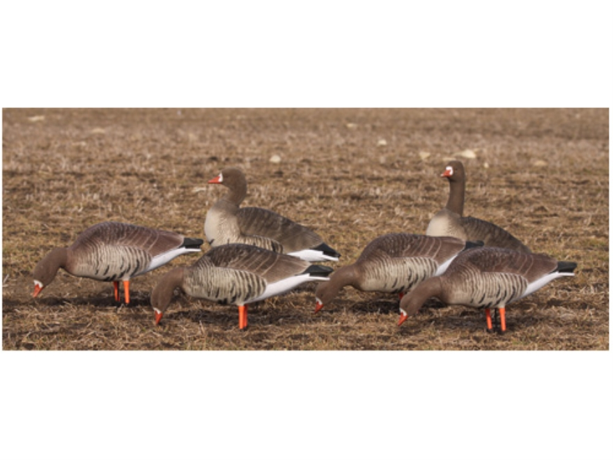 GHG Elite Fully Flocked Full Body Specklebelly Goose Decoys Harvester Pack of 6