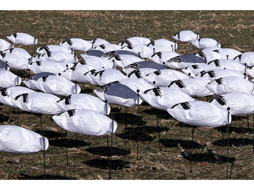DOA Migration Series Sock Snow and Blue Goose Decoy Pack of 50