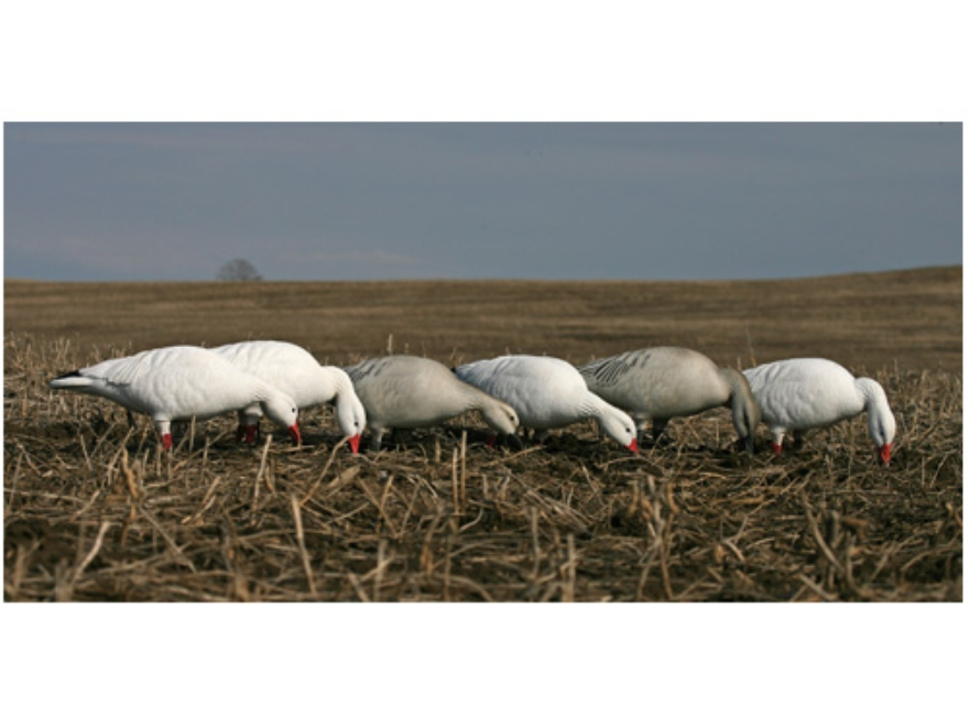 GHG Pro-Grade Full Body Snow Goose Decoys Feeder Pack of 6
