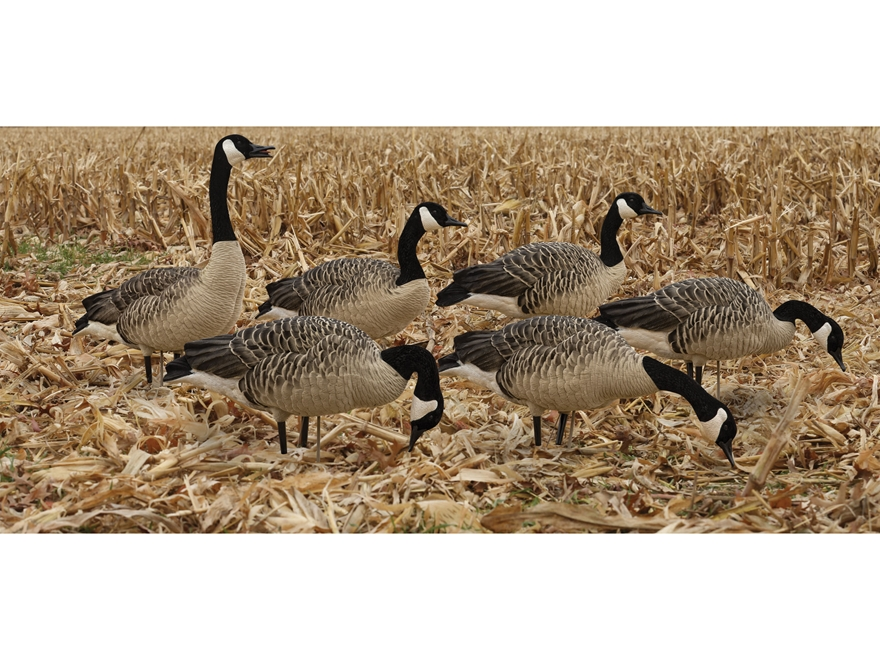 Avian-X Painted Honkers Canada Goose Decoy Fusion Pack Combo Pack of 6