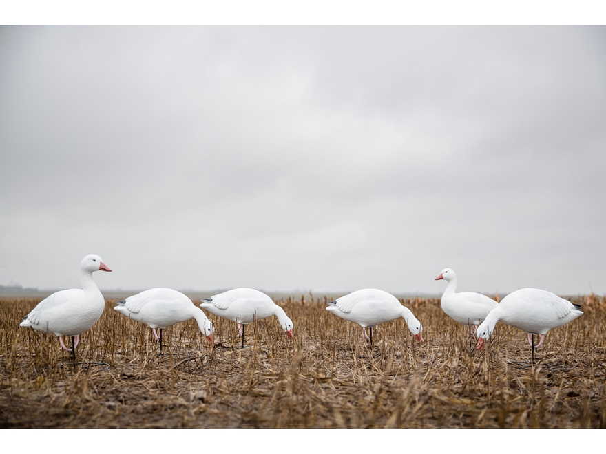 Tanglefree Pro Series Snow Goose Full Body Combo Decoy Pack of 6